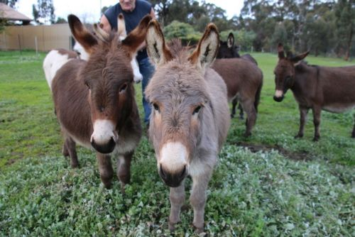 Donkey Tales Farm Cottages - Surfers Gold Coast