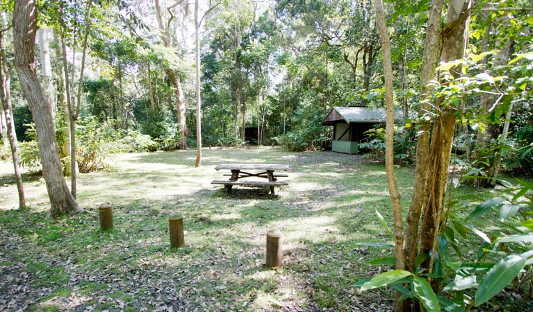 Iron Pot Creek campground - Surfers Paradise Gold Coast