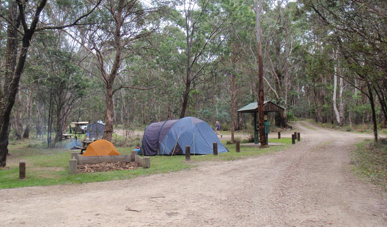 Native Dog campground - Surfers Gold Coast