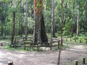 Six Mile Creek campground - Surfers Gold Coast