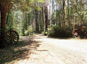 Hill n Dale Farm Cottages - Surfers Gold Coast