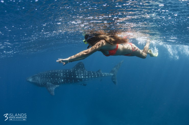Three Islands Whale Shark Dive - Surfers Gold Coast