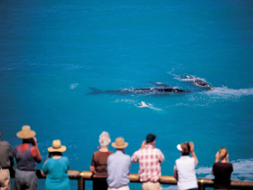 Whale Watching At Head Of Bight - Surfers Gold Coast