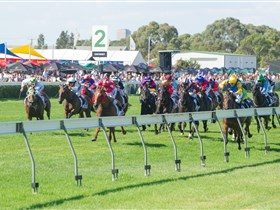 Morphettville Racecourse - Surfers Gold Coast
