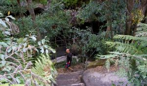 Leura Cascades Fern Bower - Surfers Gold Coast