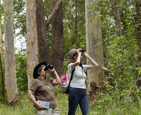 Chichester State Forest - Surfers Paradise Gold Coast