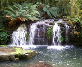 Barrington Tops National Park Walks - Surfers Gold Coast