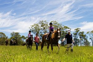 Port Macquarie Horse Riding Centre - Surfers Gold Coast