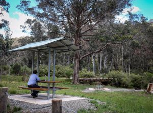 Barrington Tops State Forest - Surfers Gold Coast