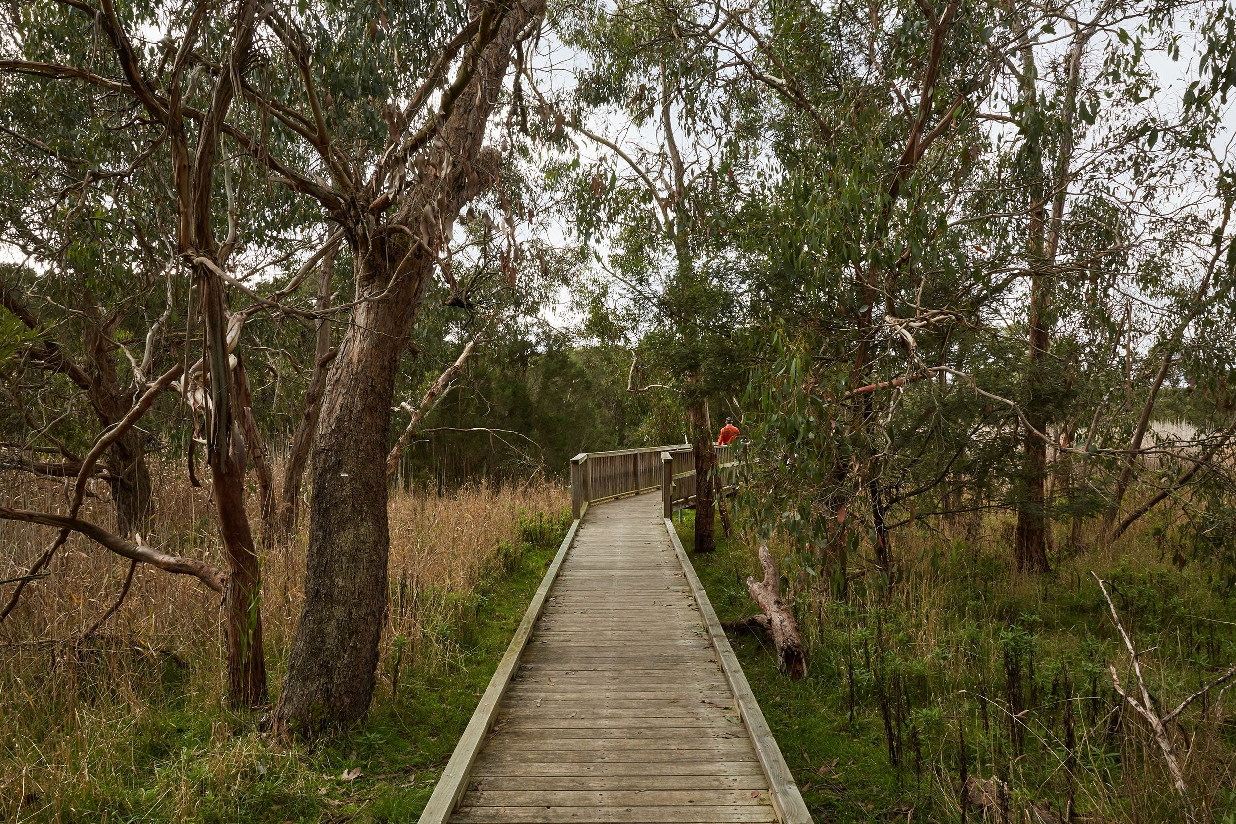 The Briars Park Walking Trails - Surfers Gold Coast