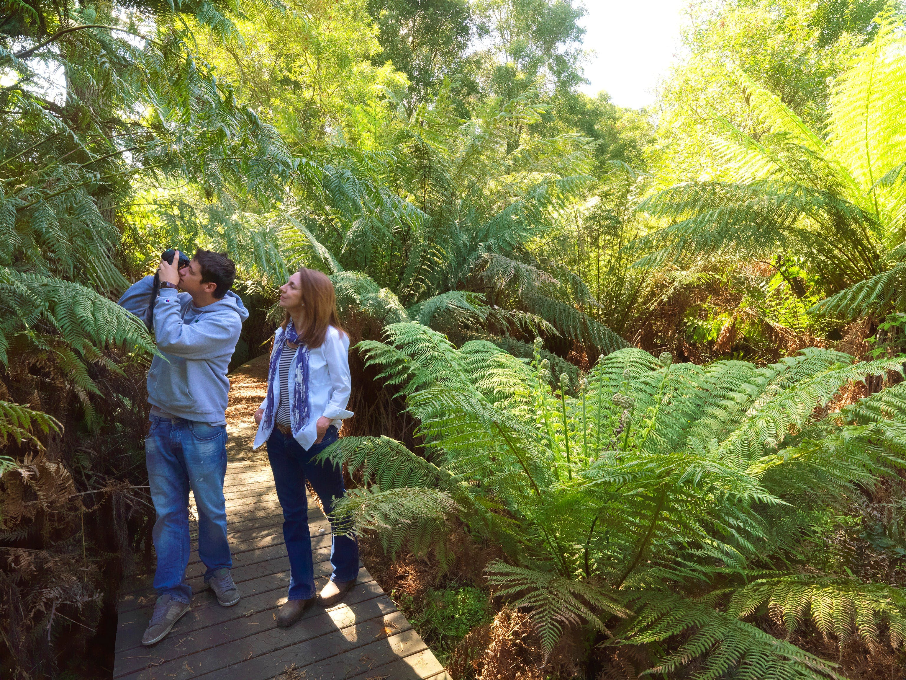 Endeavour Fern Gully Walks - Surfers Gold Coast