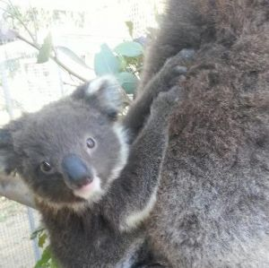 West Oz Wildlife Petting Zoos - Surfers Gold Coast