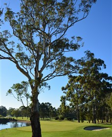 Ryde-Parramatta Golf Club - Surfers Gold Coast