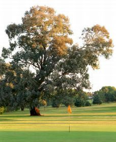 Cowra Golf Club - Surfers Gold Coast