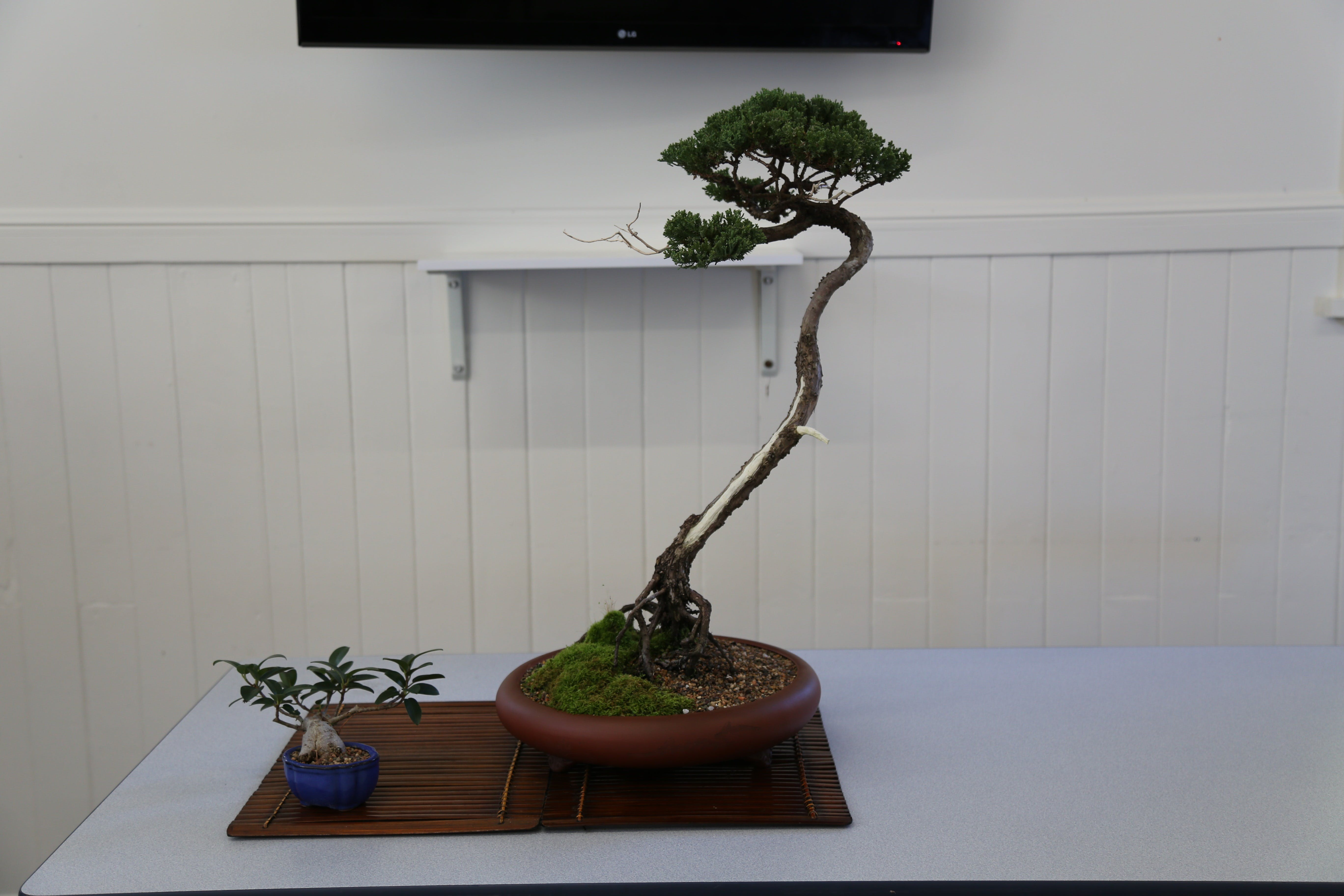 Wauchope Bonsai Workshop Group - Surfers Gold Coast