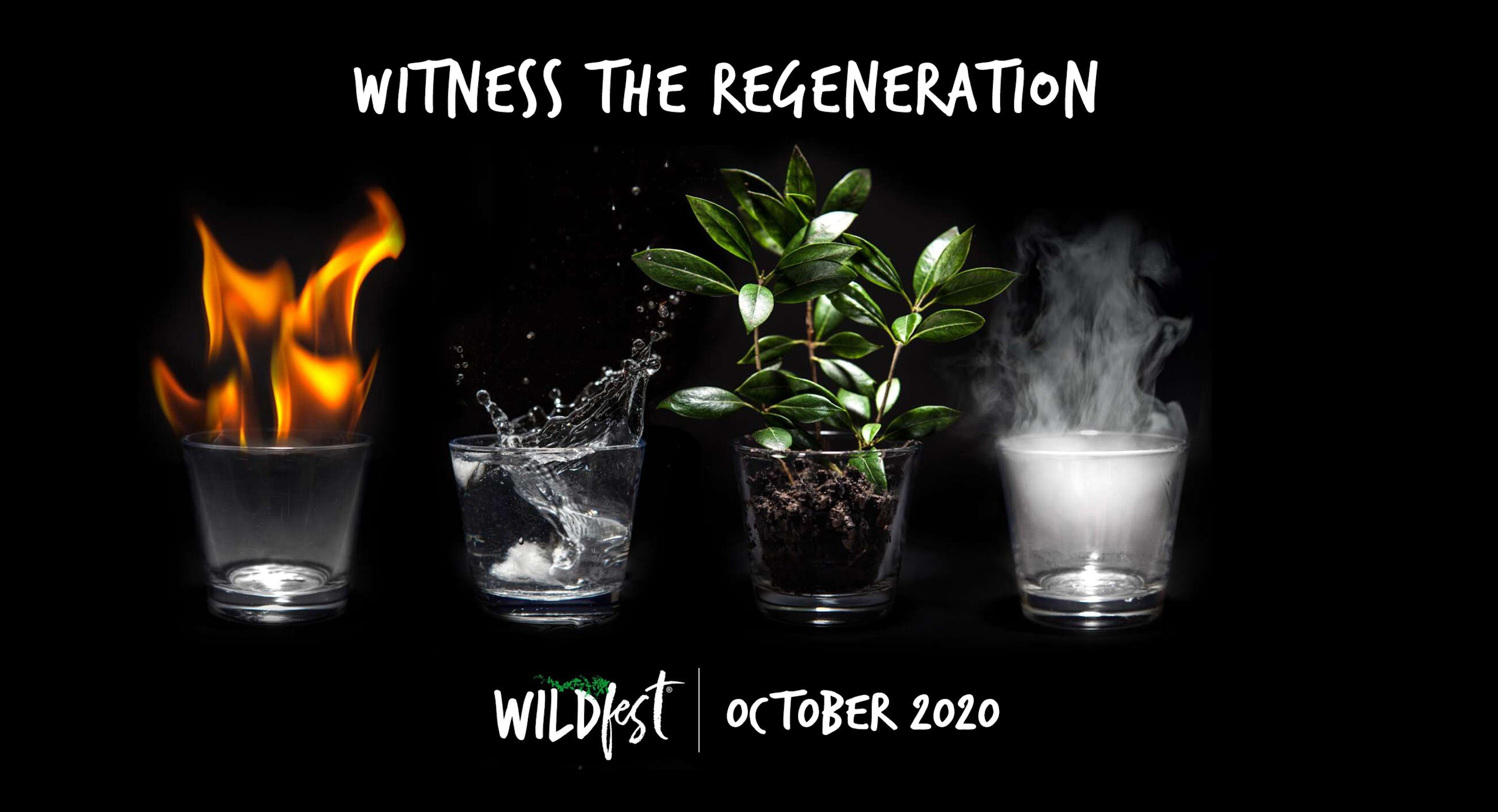 Wildfest - Annual Festival - Surfers Gold Coast