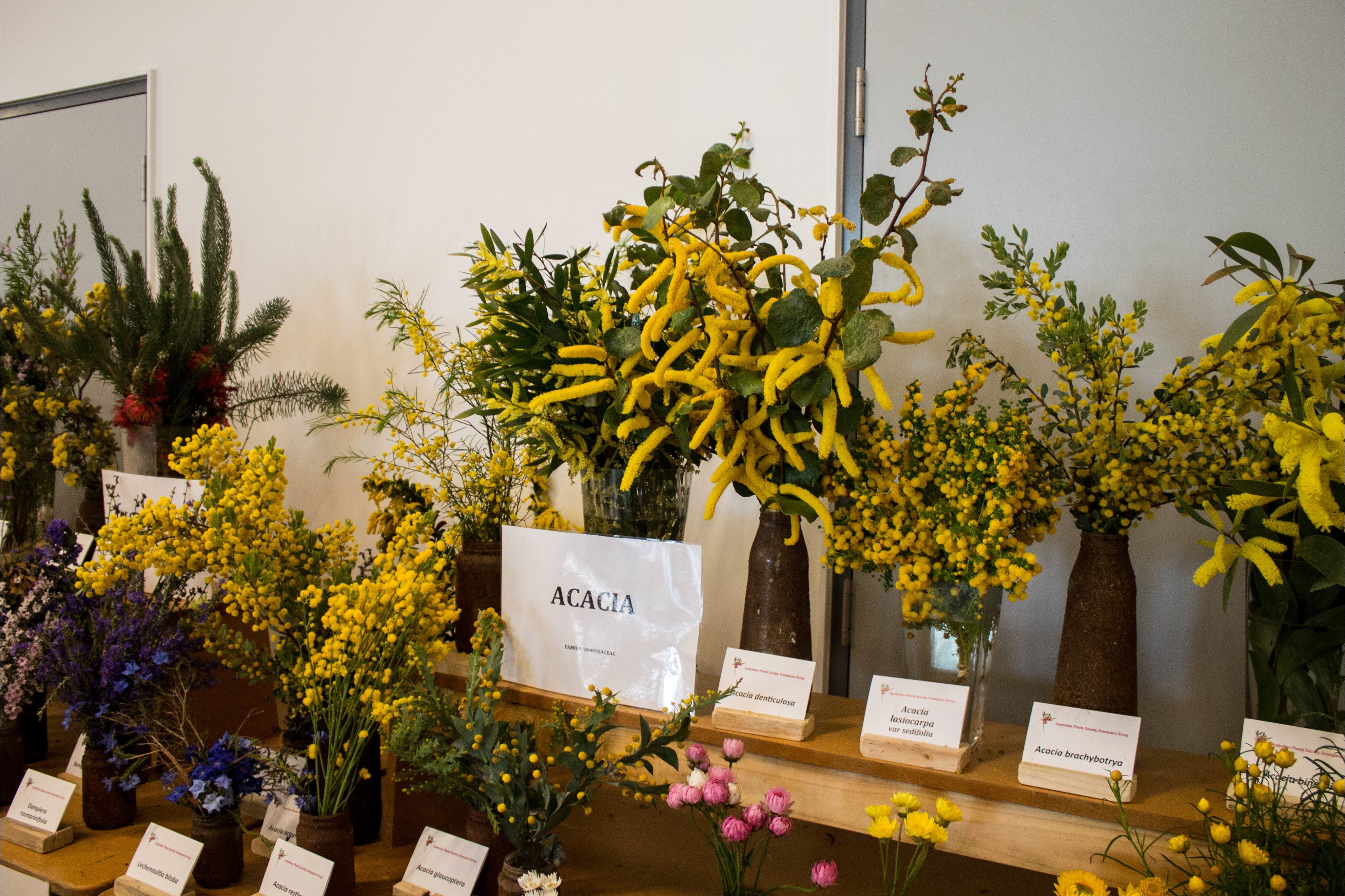 Pomonal Native Flower Show - Surfers Gold Coast