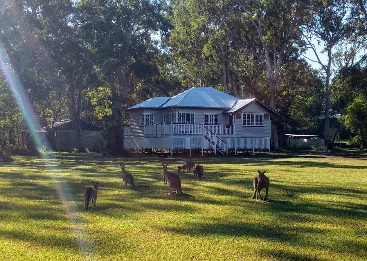 Lake Weyba Noosa Lodge  Kangaroos - Surfers Paradise Gold Coast